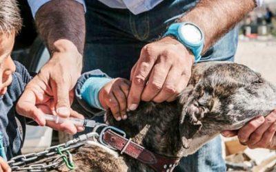 Proyecto Cañada, Amor por los animales