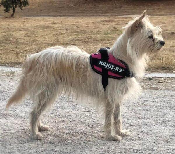 Arnes-para-perro-Julius-k9